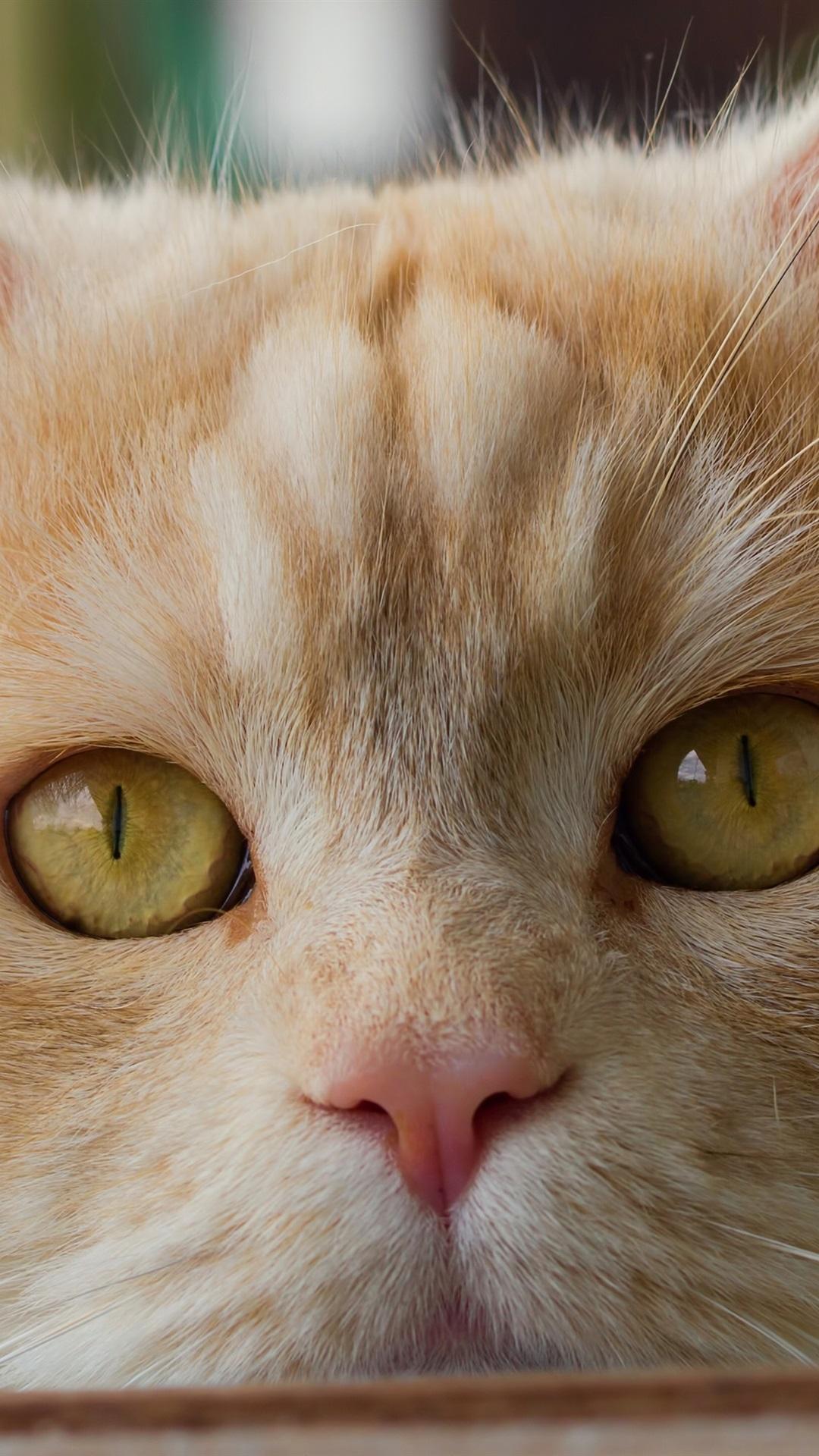 Cute Cat Face Close Up Yellow Eyes 1080x1920 Iphone 8 7 6
