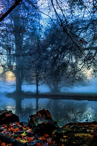 iPhone Wallpaper England, London, Morden Hall Park, trees, river, fog, autumn, dawn
