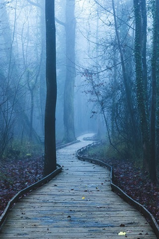 iPhone Wallpaper Footpath, trees, forest, fog, dawn