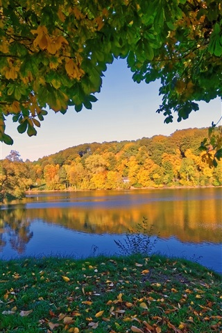 iPhone Wallpaper Germany Ulmen in the autumn, trees, river, yellow leaves