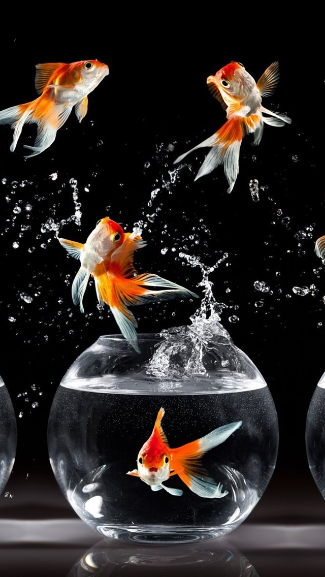 Goldfish Dance Jump Water Splash 640x1136 Iphone 5 5s 5c
