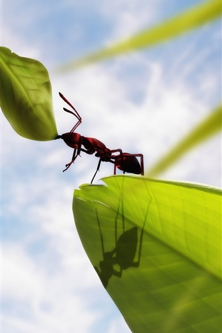 iPhone Wallpaper Insect ants, green leaves, clouds, blue sky