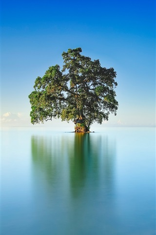 iPhone Wallpaper Lake, lonely tree, blue sky