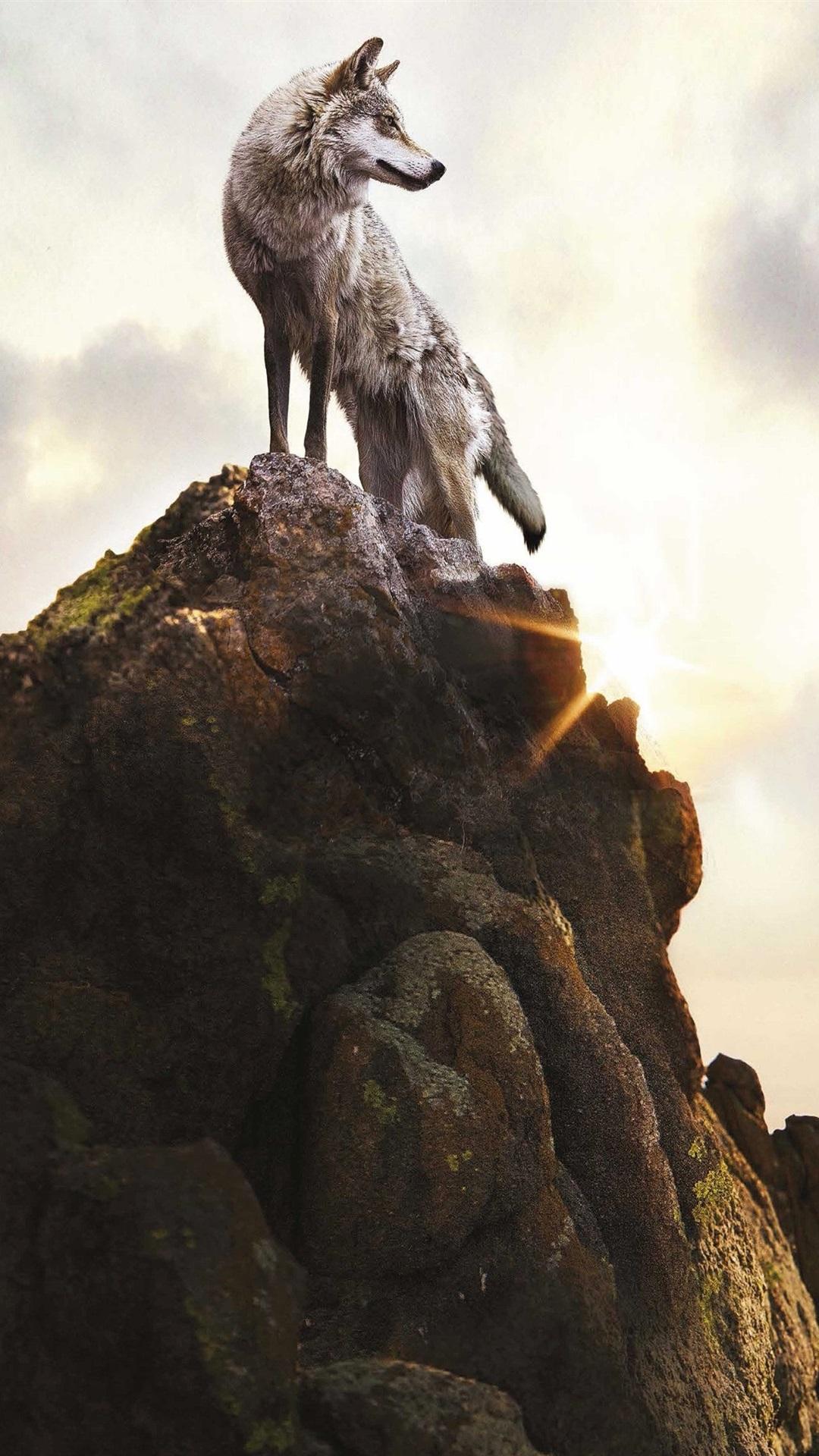 Lobo Solitario En La Parte Superior De La Montaña Piedras 1080x1920
