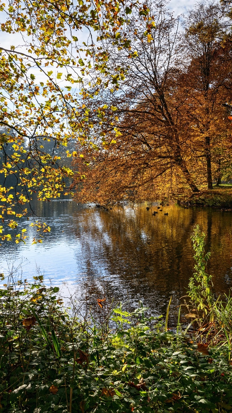 pictures of landscapes wallpaper netherlands nature landscape autumn trees 11342