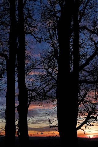 iPhone Wallpaper Night, clouds, sunset, trees silhouette