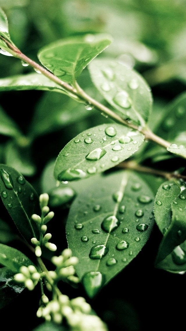 Plants After Rain Green Leaves Water Drops 750x1334