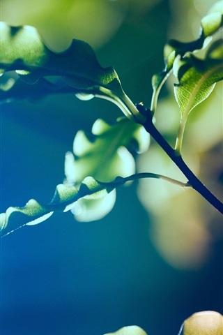 iPhone Wallpaper Plants macro photography, green leaves, bokeh