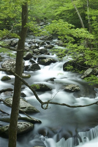 iPhone Wallpaper Tremont, Great Smoky Mountains, creek, rocks, trees, Tennessee, USA
