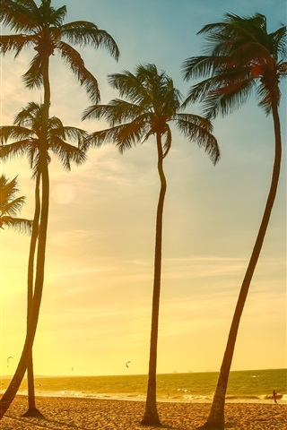 iPhone Wallpaper Tropical beach beautiful sunset, palm tree, sea, people, dusk