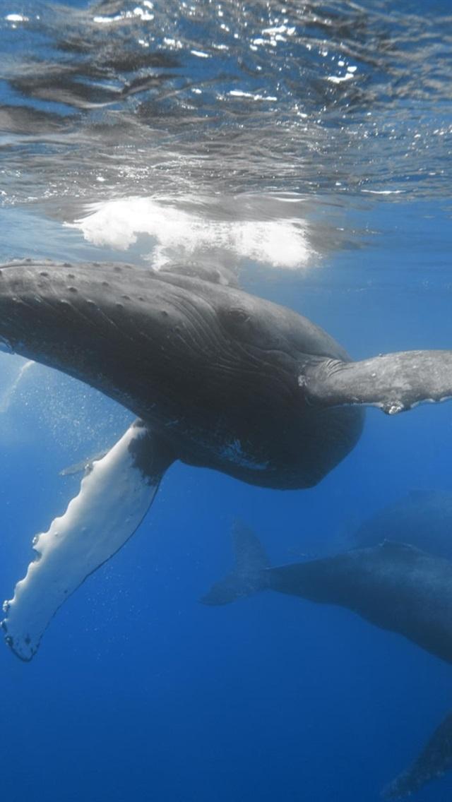 Fonds Décran Les Baleines Dans Locéan Sous Marin