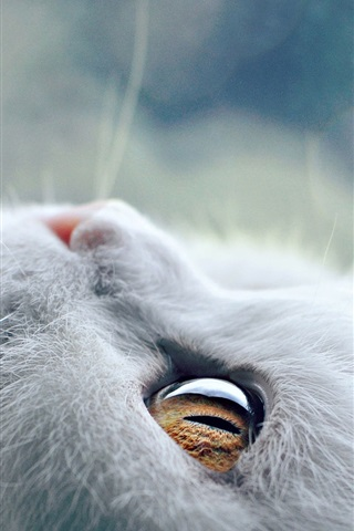 iPhone Wallpaper White cat look up, whiskers, eyes, kitten close-up