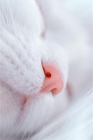 iPhone Wallpaper White cat sleep, nose, furry kitten