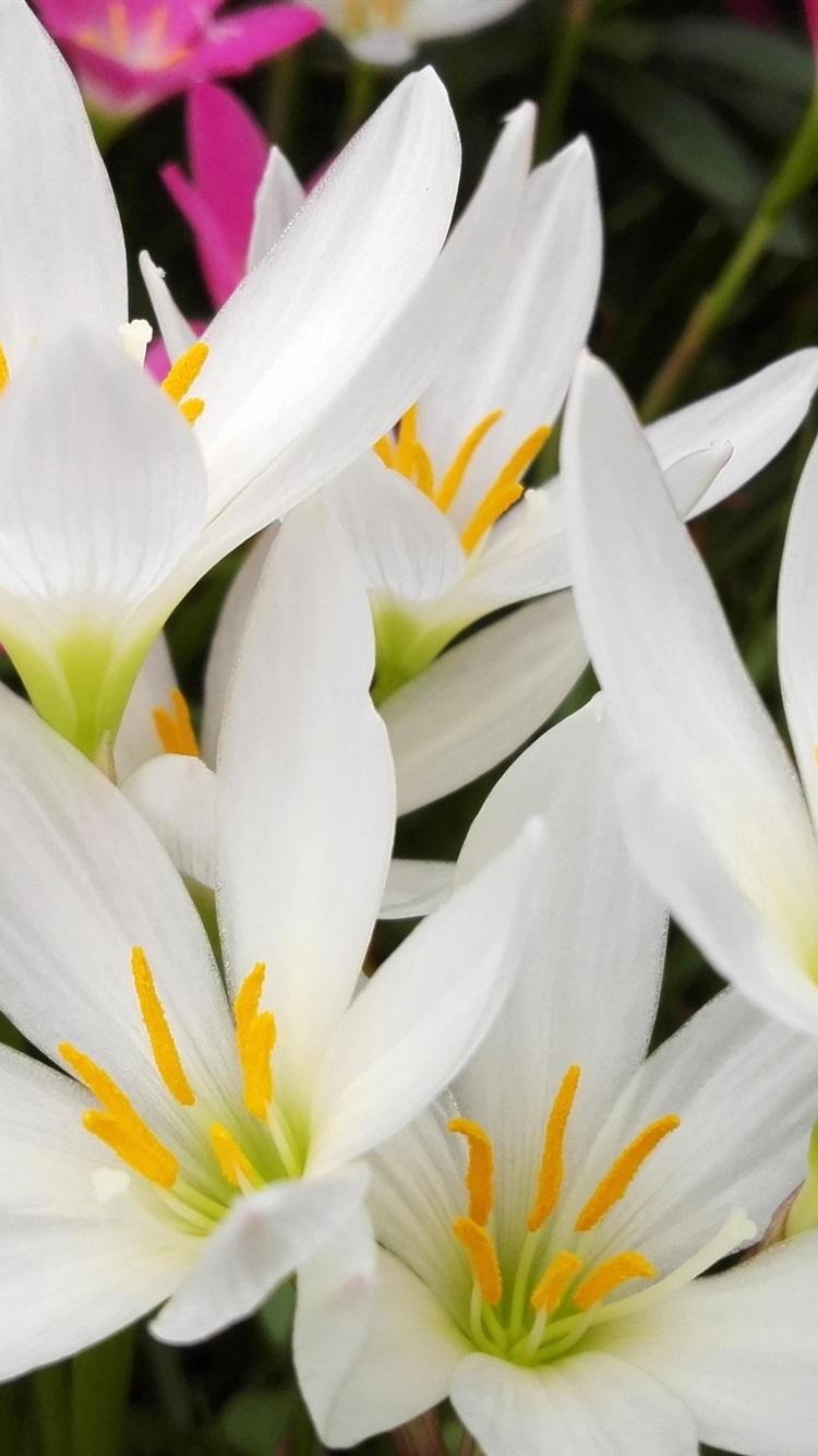 Weisse Orchidee Blumen Fotografie 2880x1800 Hd
