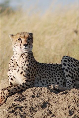iPhone Wallpaper African safari, leopard, grass