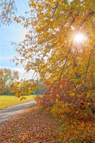 iPhone Wallpaper Autumn park, path, trees, sun rays