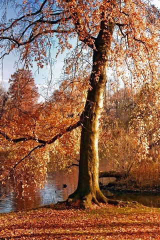 iPhone Wallpaper Autumn, trees, yellow leaves, river