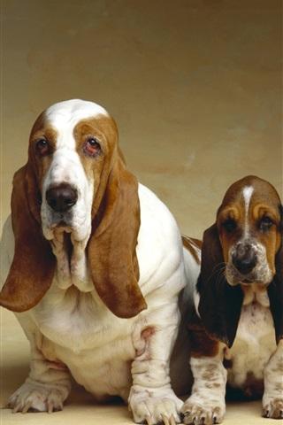 iPhone Wallpaper Basset Hound, three dogs
