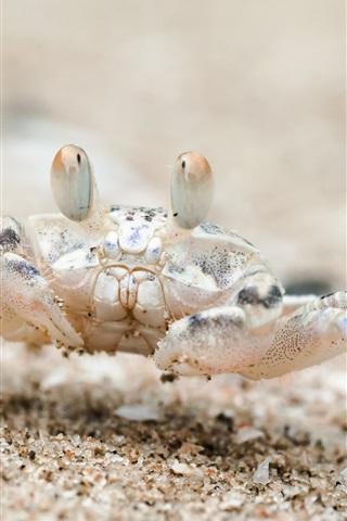 iPhone Wallpaper Beach, sand, crab, Thailand