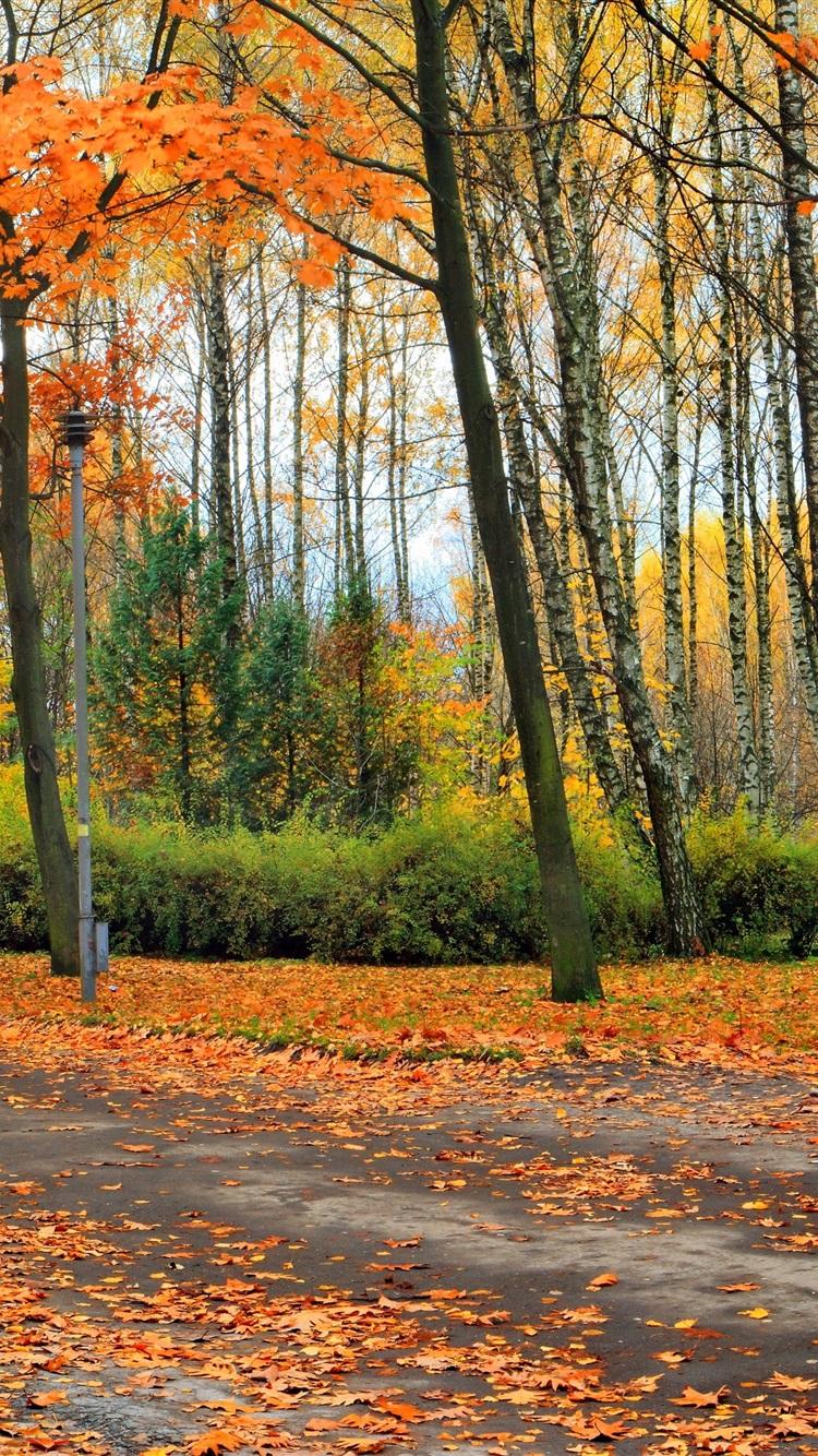 Beautiful Autumn Sunset: Wallpaper Beautiful Autumn Park, Trees, Leaves, Bench