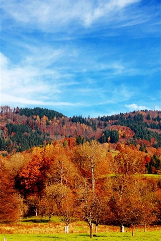 iPhone Wallpaper Beautiful autumn season, trees, grass, blue sky