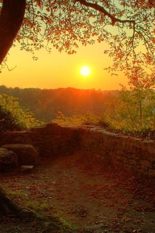 iPhone Обои Красивые утро восход солнца, дерево, дерево, ветки, листья