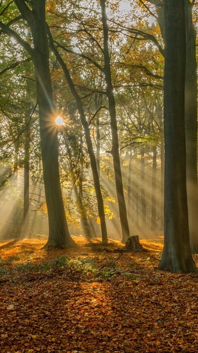 самоцветы картинки осенний парк и солнечные лучи видим