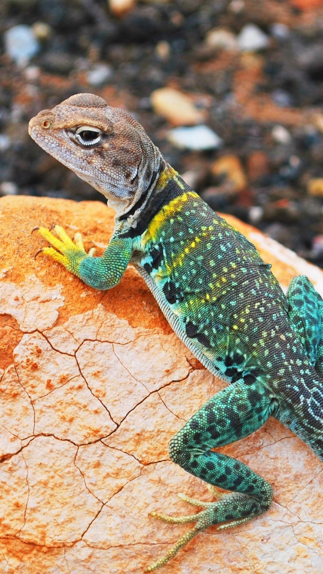 Colorful Lizard Gecko Stone Bokeh 1080x1920 Iphone 8 7 6
