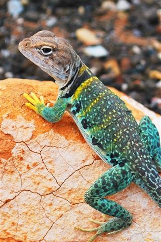 iPhone Wallpaper Colorful lizard, gecko, stone, bokeh