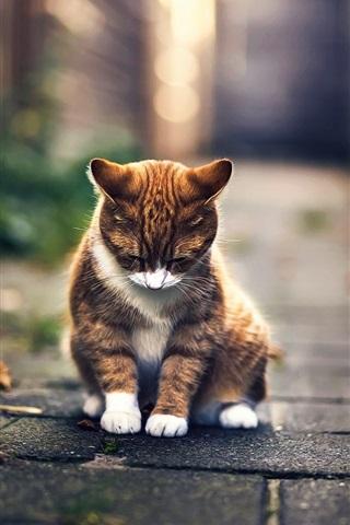 iPhone Wallpaper Cute cat rest, bokeh