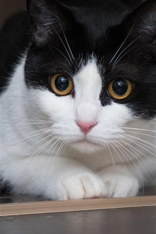 iPhone Wallpaper Cute cat, white black