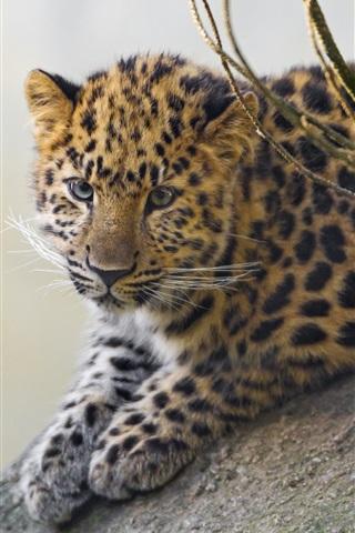 iPhone Wallpaper Cute leopard cub