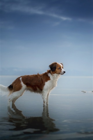 iPhone Wallpaper Dog standing at coast, sea, water, dusk