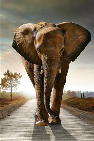 iPhone Wallpaper Elephant walk at sunset road