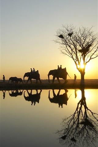 iPhone Wallpaper Elephants in safari park at sunset