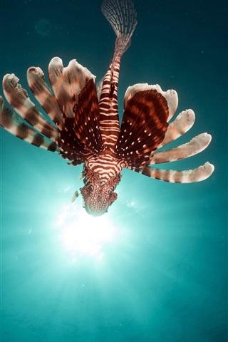 iPhone Wallpaper Flying fish, lionfish, sun rays, underwater