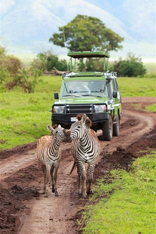 iPhone Wallpaper Kenya, Tanzania, safari, zebra