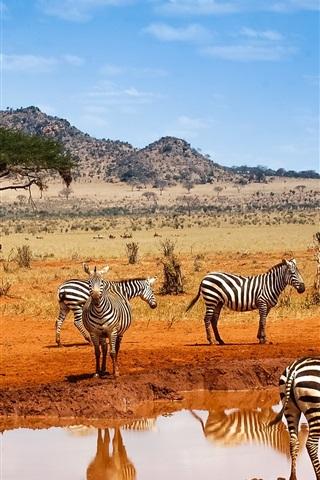 iPhone Wallpaper Kenya safari, zebras, water, blue sky