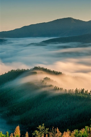 iPhone Wallpaper Morning nature landscape, mountains, trees, fog