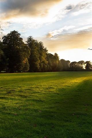 iPhone Wallpaper Nature sunset, lawn, grass, trees, clouds, bird