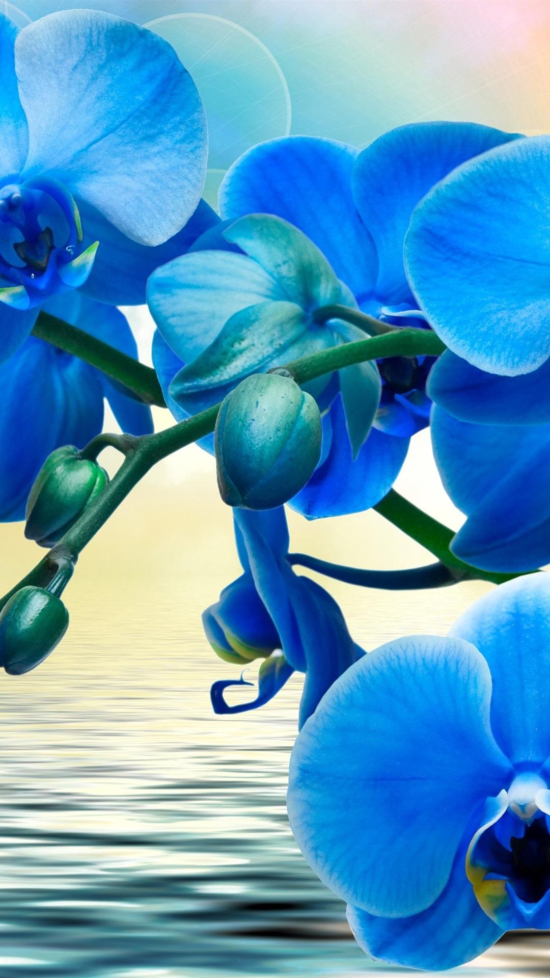 Orquideas Flores Azules Phalaenopsis Agua 1080x1920 Iphone 8 7 6