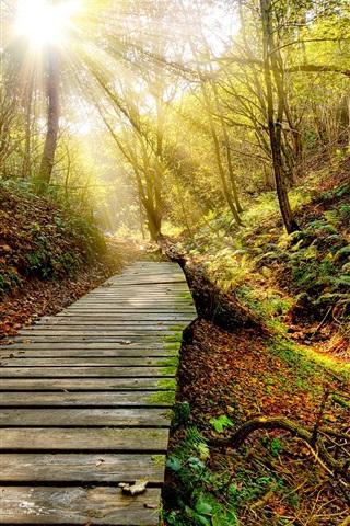 iPhone Wallpaper Park, autumn, path, trees, sun rays