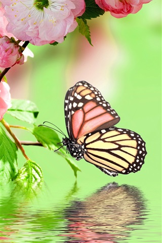 iPhone Wallpaper Pink flowers blossom, spring, butterfly, water reflection