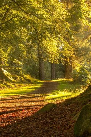 iPhone Wallpaper Scotland Aberdeen, trees, path, sunshine