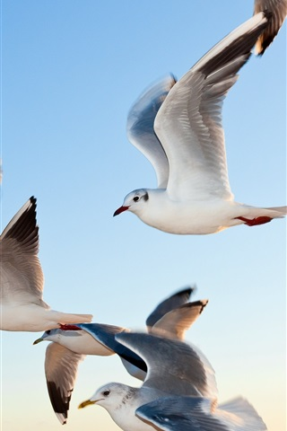 iPhone Wallpaper Seagulls flying