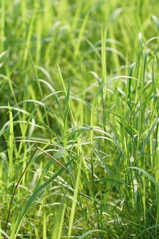 iPhone Wallpaper Summer grass, green, sunshine