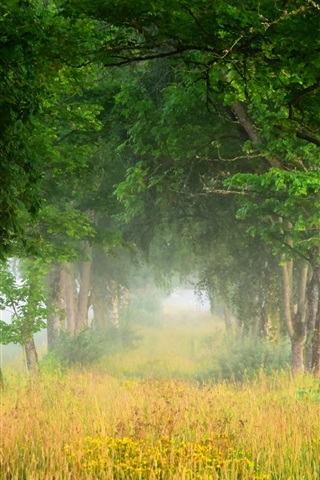 iPhone Wallpaper Summer nature scenery, trees, grass, fog, dawn