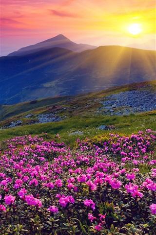 iPhone Wallpaper Sunrise, mountains, flowers, grass, dawn