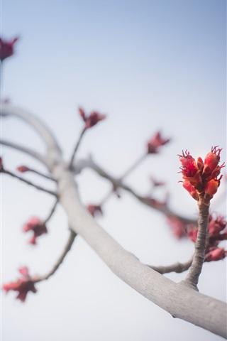 iPhone Wallpaper Tree branch, stem, buds, sky