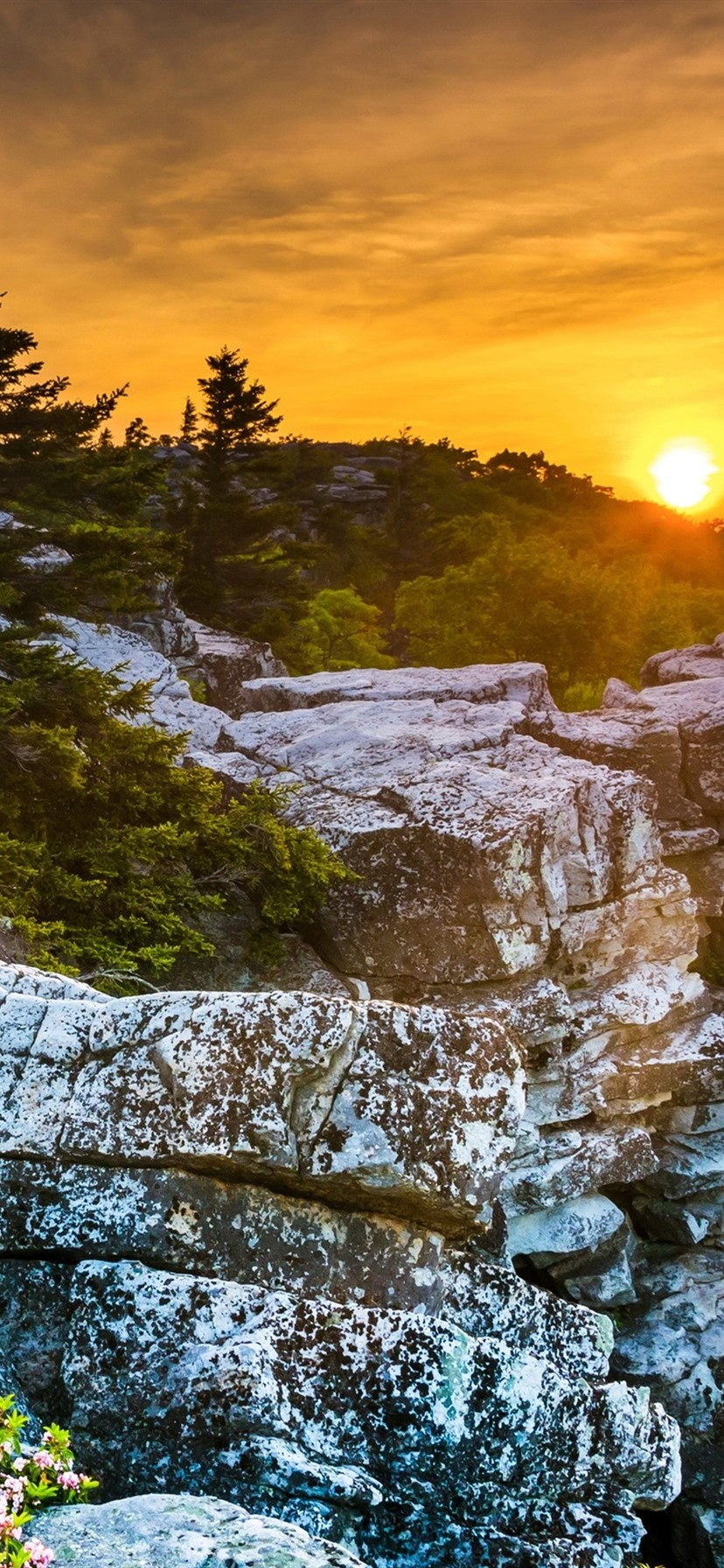 Usa West Virginia Beautiful Sunset Rocks Trees Red Sky